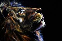 Meditation lion